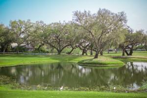 trees & lake